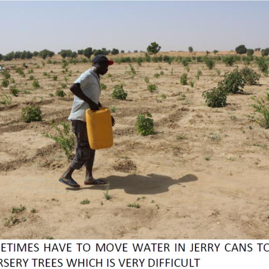watering trees in jerry cans